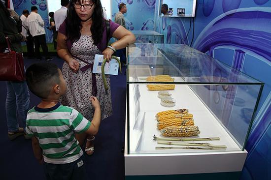 博览会上展出的转基因与非转基因玉米。视觉我国 质料