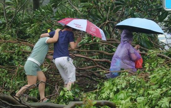 2017年8月23日,珠海市鸡公山三路一条道路被台风刮倒的树木挡住去路,行人艰难前行。 东方IC 图