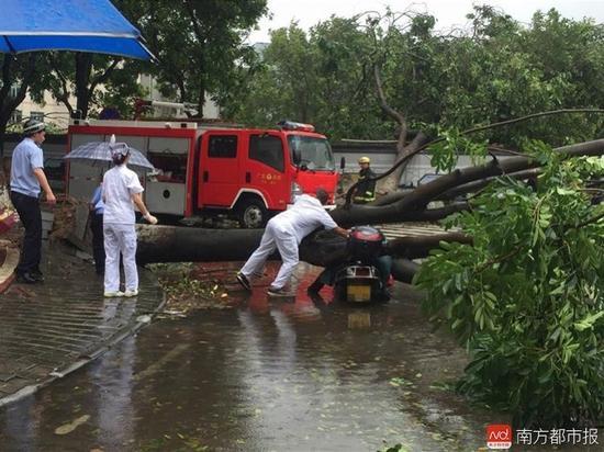 中山市 女子被倒下大树砸中身亡