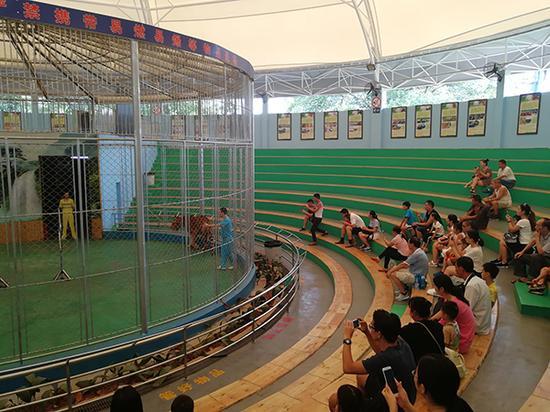 马戏团仍在进行表演。