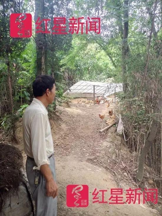 ▲邓超领着记者去看他散养的百余只中华宫廷鸡。