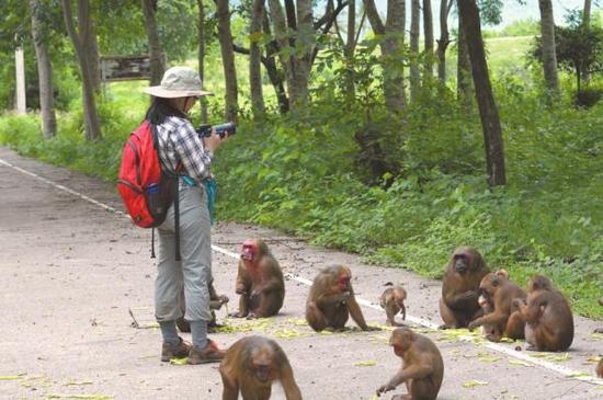 高久媚在泰国追猴子。