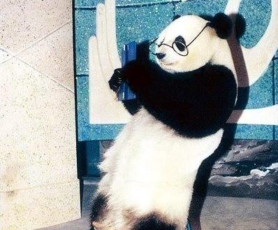 传奇大熊猫巴斯去世