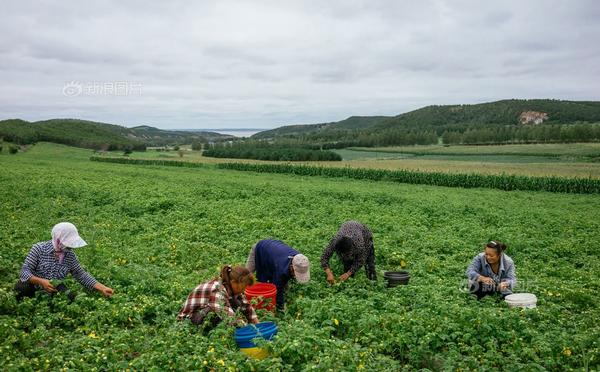 东方菇娘初养成 带领农民脱贫