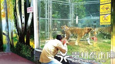 游客扮猴逗虎遭批
