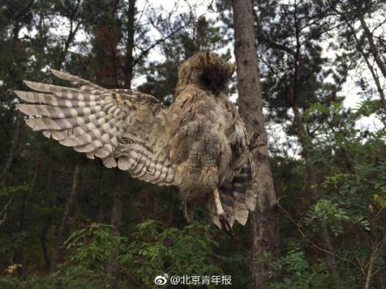 大连老铁山保护区现捕鸟网,十余只国家二级保护鸟类死亡。 本文图片均来自微博@北京青年报