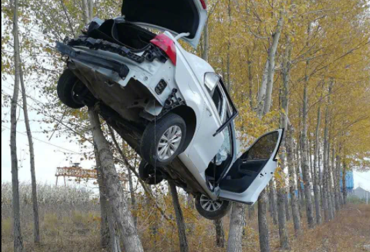 """实拍:小轿车冲出路面""""飞""""上树"""