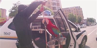 警方将解救的金刚鹦鹉送到动物园。 警方供图