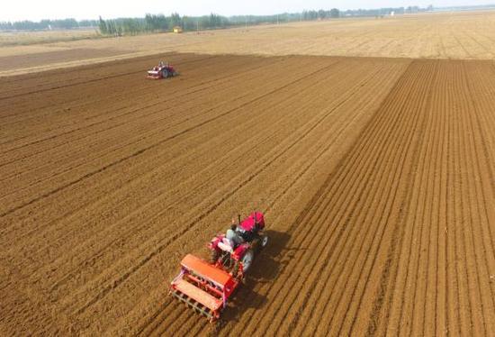 10月11日,农民驾驶农机在山东省聊城市茌平县贾寨镇侯楼村田间播种小麦。 新华社 图