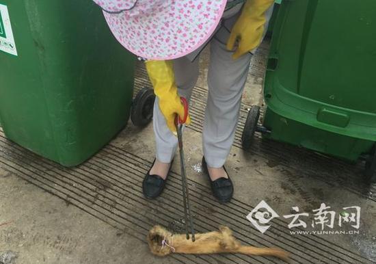 保洁把这个动物尸体又找了出来