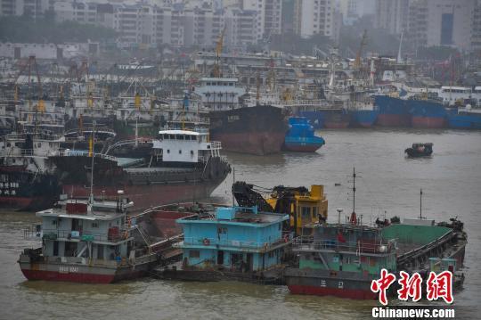 图为海口新港码头停靠着众多回港避风的船只。 骆云飞 摄