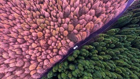 迎接中共十九大图片专题——绿色生态篇