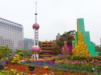 北京街头:金秋十月 花团锦簇