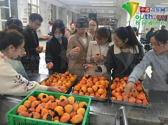图为学生在品尝柿子。陕西师范大学后勤集团供图