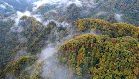 美!四川光雾山层林尽染云雾缭绕如仙境