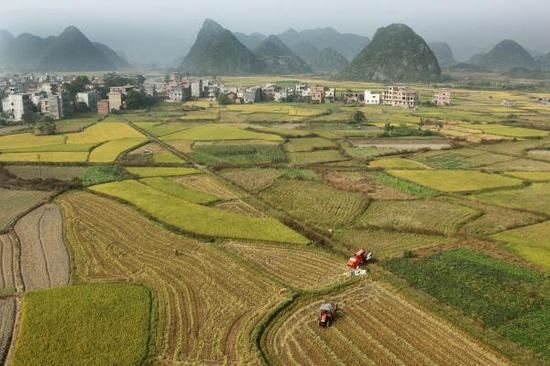 2015年10月22日,湖南永州,道县清塘镇,收割机在金黄的稻田中忙碌。 视觉中国 资料图