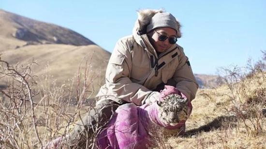 王鹏准备把救助的雪豹抱到山上去放生。