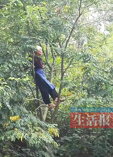 """黄阿婆爬树看""""环广西""""的照片火了(图片来源网络)"""