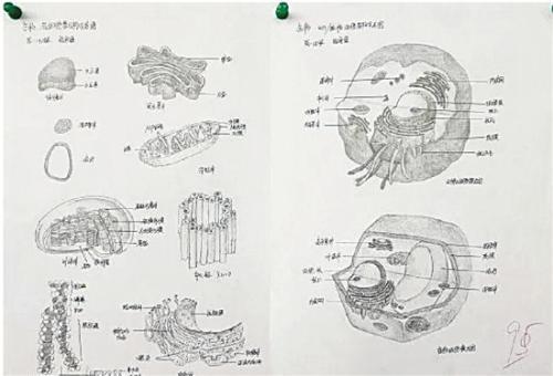 """一名同学的参赛作品为""""生物各细胞结构示意图"""",获得了95分的好成绩"""