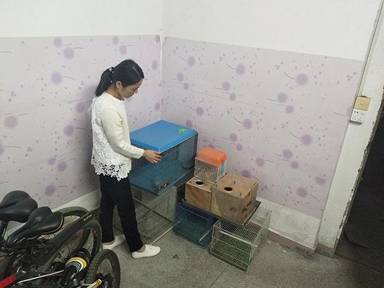 任盼盼整理出租屋内的鸟笼,笼内曾经饲养的四十多只鹦鹉都被司法机关收缴。澎湃新闻记者 王选辉 图