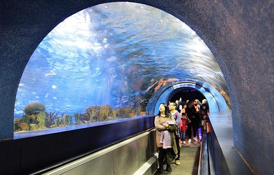 """北京海洋馆,游人正在参观""""海底隧道""""。  东方IC 资料图"""