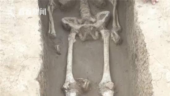 "5600年前就有""剁手党""?墓葬群现""剁手""习俗"
