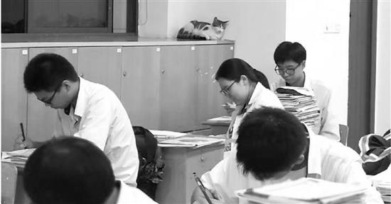 学生们自修时,流浪猫常常出现。