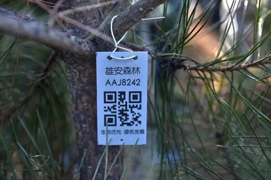 扫描二维码后能详细了解到苗木的来源、规格、坐标等情况。