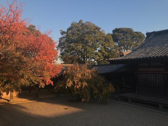 京都寺庙秋景