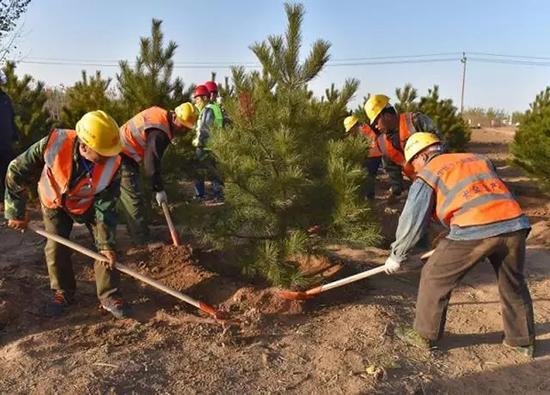 工人在植树。 本文图均为 雄安发布微信公众号 图