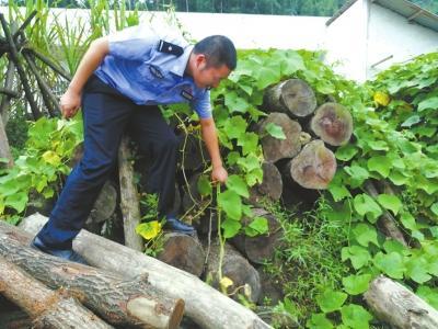 宜宾森林公安缴获的31截桢楠木料。