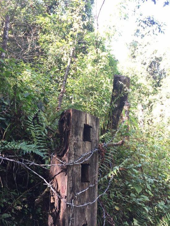 一些长臂猿栖息地被划入公益林,周围已被圈起来。
