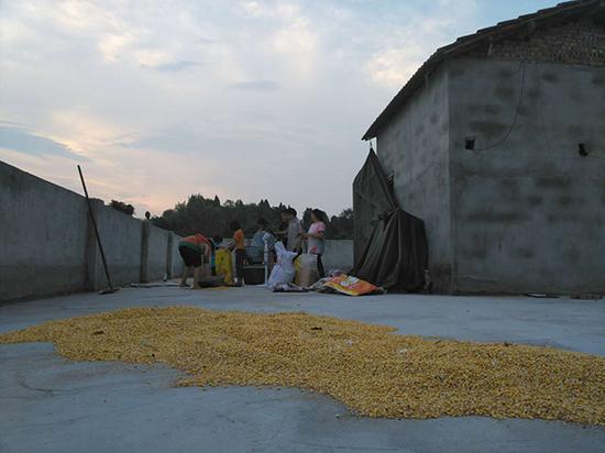 夕阳西下,一家人在楼顶收玉米。