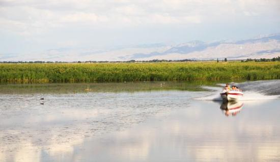 乌梁素海湿地。