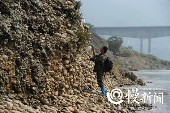 北碚嘉陵江边上,罗长国行走在河滩上寻找心仪的奇石