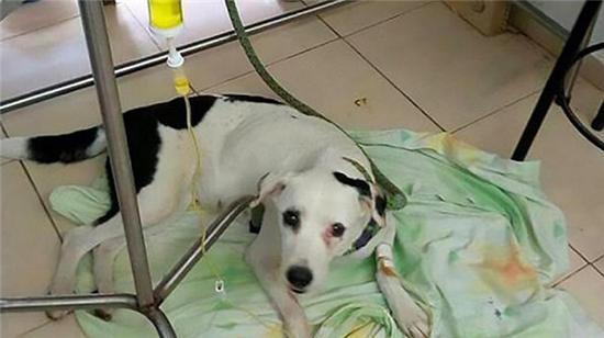 新锦福5888下载狗被遗弃在机场 等主人一个月后因太伤心死