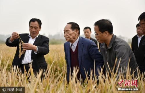 """资料图:""""杂交水稻之父""""袁隆平(左二)在示范田查看超级杂交水稻。 郝群英 摄 图片来源:视觉中国"""