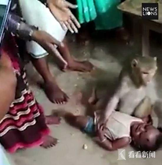 """泼猴""""劫持""""小孩摁地上想抱走 谁靠近就咬谁(图)"""
