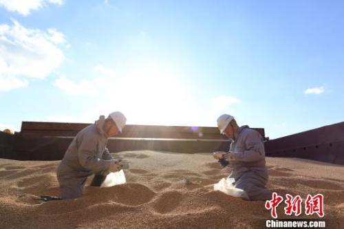 资料图:辽宁大窑湾检验检疫局工作人员对进口大豆进行查验。 闫善友 摄