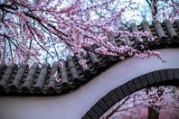 征集:春色满园关不住