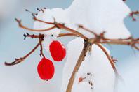 看过这些照片才知道冬季的美