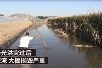 洪水过境后的寿光:菜农哭诉毕生积蓄没了
