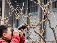 春暖北京 又待一年山花烂漫时