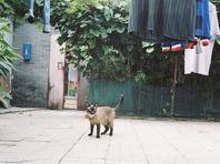 那一年的北京胡同和猫