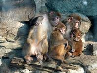 北京动物园猴子撒娇卖萌求抱抱