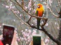 北京明城墙遗址公园第十二届梅花文化节开幕