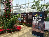 """北京最""""古老""""植物温室重新开放 首展4种猴面包树"""