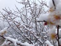 北京城内外雨雪交加景色美 山区一片银装素裹