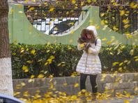 北京迎大风降温天气 风吹落叶满地金黄