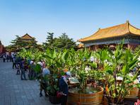 """市民在北京太庙体验""""木海观鱼"""""""
